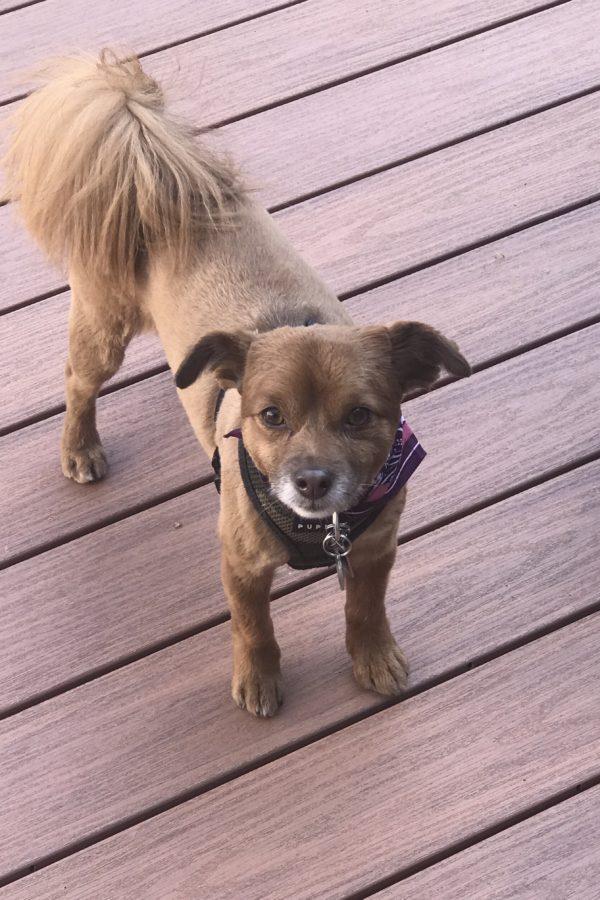 Dog of santa fe gay transplant